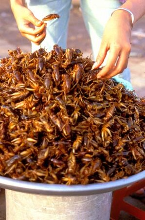 Selling%20crickets%20crop.jpg