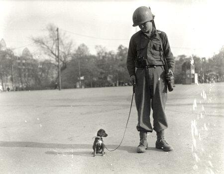 WWII puppy.jpg