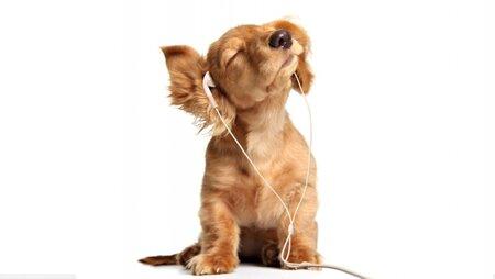 earphones-1585543935276-3448.jpg