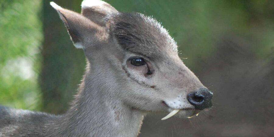 vampire deer.jpg