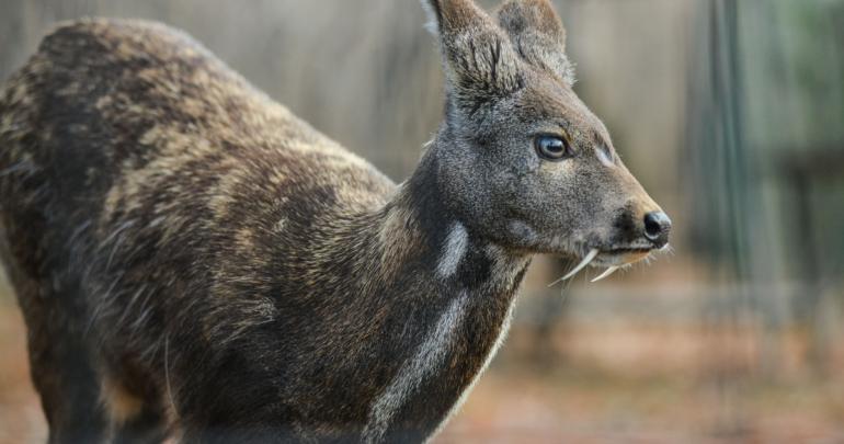 vampire deer 2.png