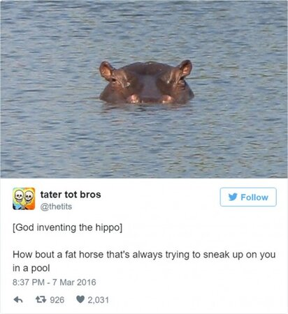 twitter-animals-hippo.jpg