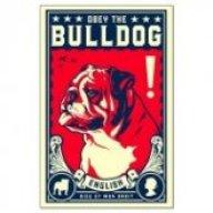 BullDawg